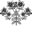 Hypericum vector image vector image