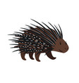 porcupine icon isolated on white vector image vector image
