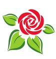rose flower symbol tatoo vector image