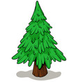 cartoon green fir tree on white background vector image