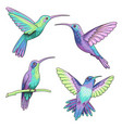 hummingbirds isolated vector image vector image
