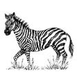 A cute zebra vector image vector image