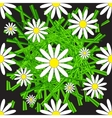 Chamomile and Grass Seamless Pattern vector image vector image