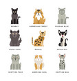 flat domestic breeds cats vector image vector image