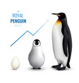 penguin grow up realistic vector image vector image