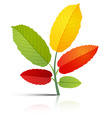 Abstract Plant with Colorful Leaves on White vector image vector image