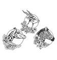 antelope zebra giraffe head animal sketch vector image