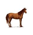 Arabian brown horse standing sketch vector image vector image