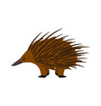 echidna cute echidna character on white vector image vector image