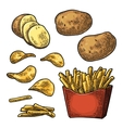 French fry stick potato in paper box and chips vector image vector image