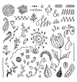 Set of hand drawn floral doodle elements vector image vector image