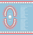 Tooth chart with names - dental infographics