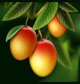 mango on branch