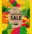 autumn sale lettering label vector image vector image