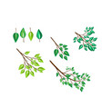 brushes with branches and leaves vector image