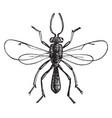 katydid egg parasite vintage vector image vector image
