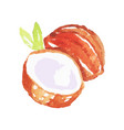 watercolor painting of whole coconut with half and vector image vector image