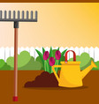watering can rake and tulips flowers gardening vector image