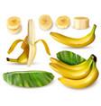 banana plant realistic set vector image vector image