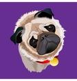 Portrait Of A Pug vector image