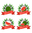 red fruit watermelon vector image vector image