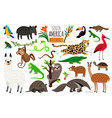 south america animals cartoon guanaco and vector image