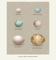 variety of birds eggs vector image vector image