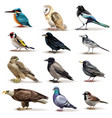 birds realistic fauna collection vector image vector image