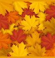 fallen maple autumn leaves background vector image