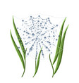 morning dew on spider web and grass isolated on vector image vector image