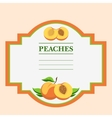 Peaches vector image vector image