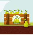 pear fruit always fresh in wood basket vector image