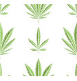 seamless texture green leaves marijuana in vector image vector image