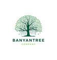banyan tree logo icon vector image