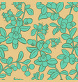cranberry pattern vector image