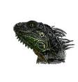 green iguana head vector image