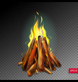 realistic burning bonfire with wood on vector image
