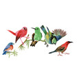 cute colorful small birds sitting on twig on white vector image