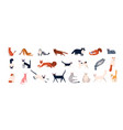 bundle adorable cats various breeds sitting vector image vector image