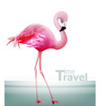 flamingo card beautiful pink bird on blue vector image