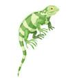 khameleon reptile icon cartoon style vector image