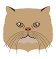 persian cat avatar cat breeds vector image