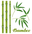 Set of bamboo plants and leaves Objects for vector image