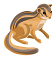 chipmunk icon cartoon style vector image vector image