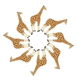 giraffe in circle vector image vector image
