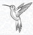colibri or hummingbirds for logo icon t-shirt vector image vector image