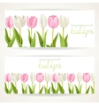 Pink and white tulips on two horizontal banners on vector image vector image