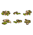 pistachio nuts and kernels vector image