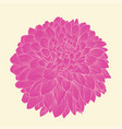 beautiful pink dahlia drawn in graphical style vector image vector image