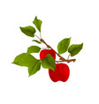 branch apple tree with red apples and leaves vector image vector image